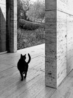 1326.30 x 40 cm Digital C-Print (Edition of 5)40'00 €German pavillion of BarcelonaLudwig Mies van der RoheRebuilding: Ignasi de Solà-Morales / Cristian Cirici / Fernando Ramos