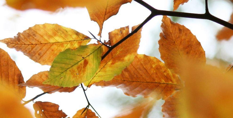Enjoy the Magic of Fall
