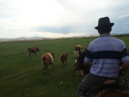 Cattle and tourist herding