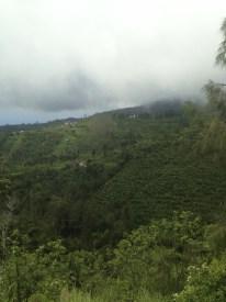Scenery Bali