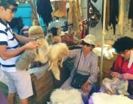 Examining the furs