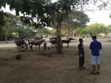 Hiring a horse cart!