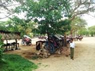 Bagan Horse Carts