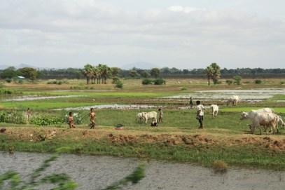 Farmlands