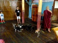 Stars of the monastery... cats