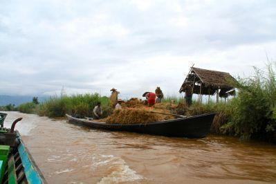 Inle Lake Farmers