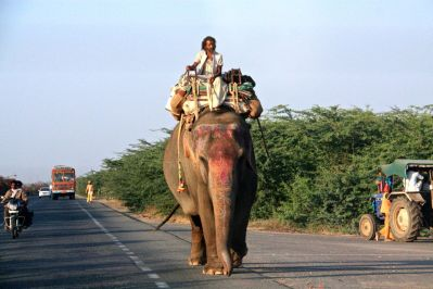 Drive from Jaipur Elephant