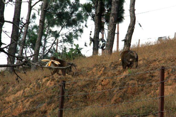 Monkey Thiefs Bhutan