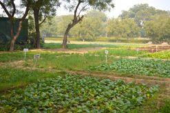 Trident Agra Garden 3
