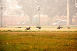 Red Fort Delhi Falcons