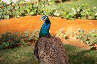 Suryagarh Peacock Close