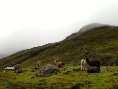 Lares Trek Day 2 Village Llamas