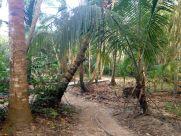 Park Tayrona Path for Hike