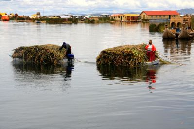 Uros Floating Islands Reed Collectors