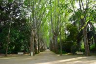 Algiers Le Jardin d'Essai du Hamma Walkway