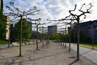 Dusseldorf Rheinturm Walk Trees