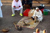 Jemaa el-Fnaa Cobra Charmer