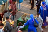 Jemaa el-Fnaa Monkey Handler-2