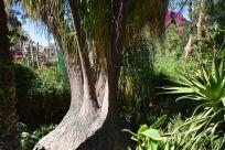 Majorelle Garden Tree