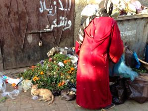 Marrakech Souk Cat