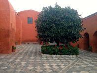 Monasterio Di Santa Catalina Tree