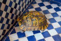 Ryad Alya Turtle
