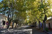 Colonia Del Sacramento Plaza Trees