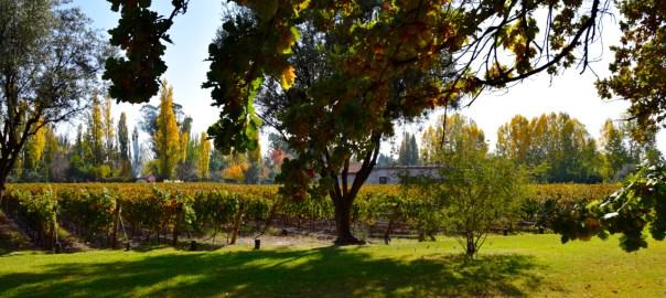 Mendoza Clos de Chacras Vineyard