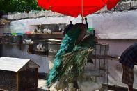 Port-au-Prince Street bird market