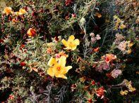 Kilimanjaro Back Flowers