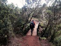 Kilimanjaro Mandara Hut Hike Bridge