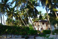 Next Paradise Zanzibar Palms