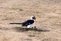 Serengeti Bird blackand white