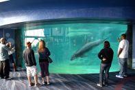Atlanta Aquarium Dolphin