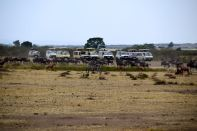 Maasai Mara Great Migration Zebras and Trucks