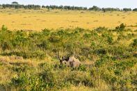 Maasai Mara Rhino