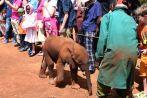 Nairobi The David Sheldrick Wildlife Trust Baby Elephant