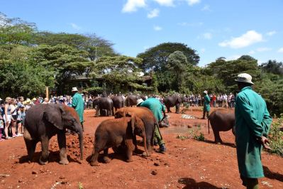 Nairobi The David Sheldrick Wildlife Trust Elephants