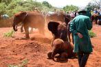 Nairobi The David Sheldrick Wildlife Trust Playing