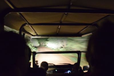 Bush Braai Night Driving