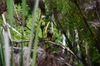 Kirstenbosch National Botanical Garden Bird