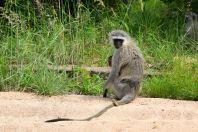 Self Drive Monkey