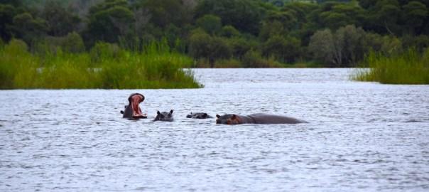Zambezi header