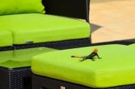 sofitel-malabo-lizard