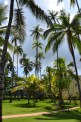 omali-lodge-palm-tree