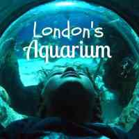 London Aquarium. Yes Please!
