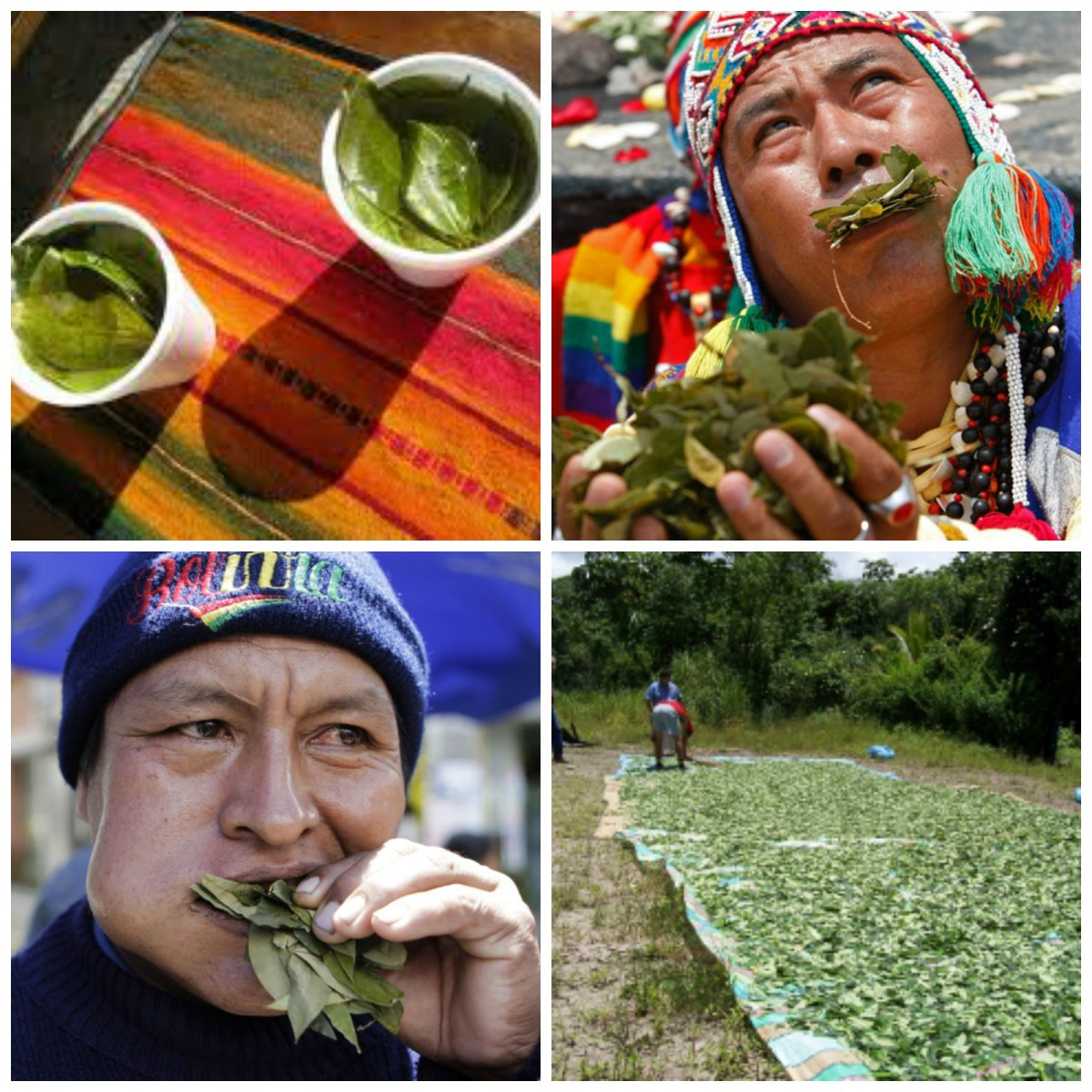 Coca Tea South America