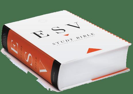 esvsb-feature