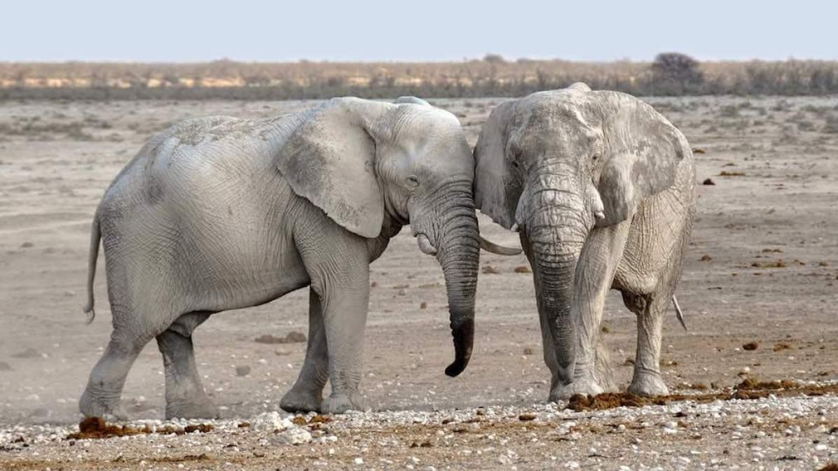 Desert-dwelling Elephants, Namibia - by kolibri5:Pixabay