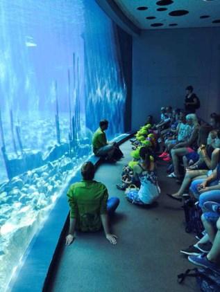 Herr Dienemann von der Zooschule spricht über das Leben der Delfine.